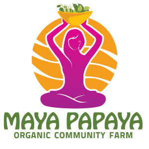 Maya Papaya Organic Farm Field Trips