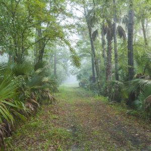 Wekiva River Buffer Conservation Area