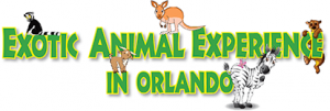 Exotic Animal Experience in Orlando
