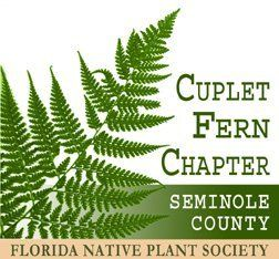 Cuplet Fern Florida Native Plant Society Field Trips